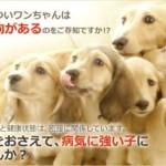 プロキュアがお試し500円!