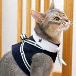 猫ちゃん用ベスト型ハーネスが激売れ中!